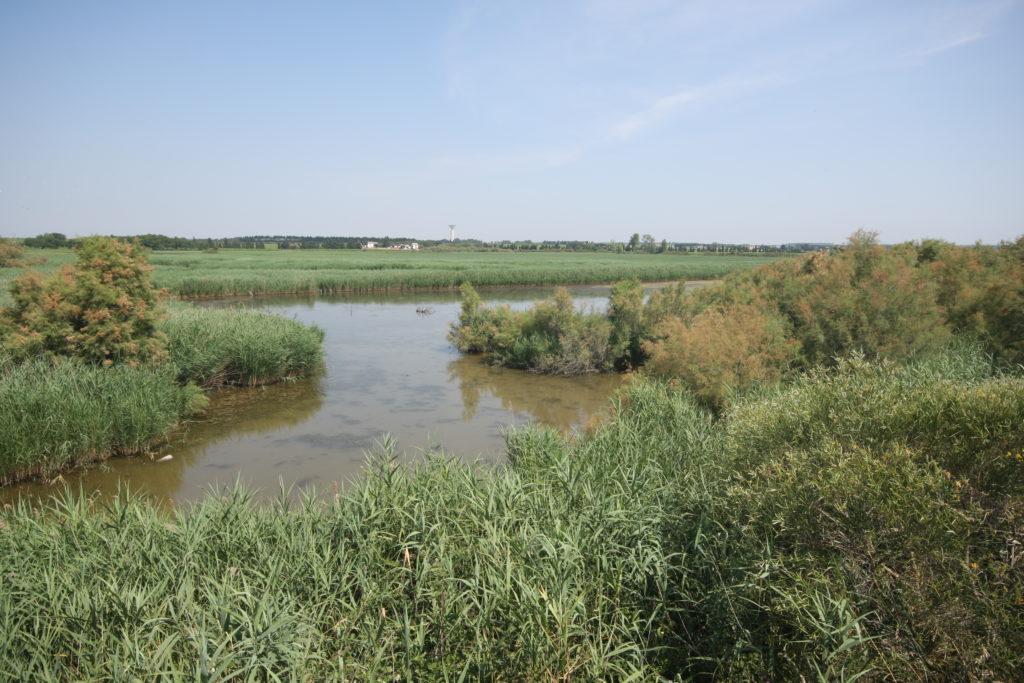 politiques de compensation  u00e9cologique pour am u00e9liorer la conservation