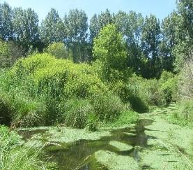 Étude des zones humides du contrat global d'actions Essonne