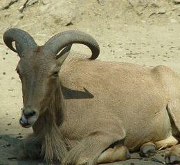 réserve Zoologique de Takherkhort