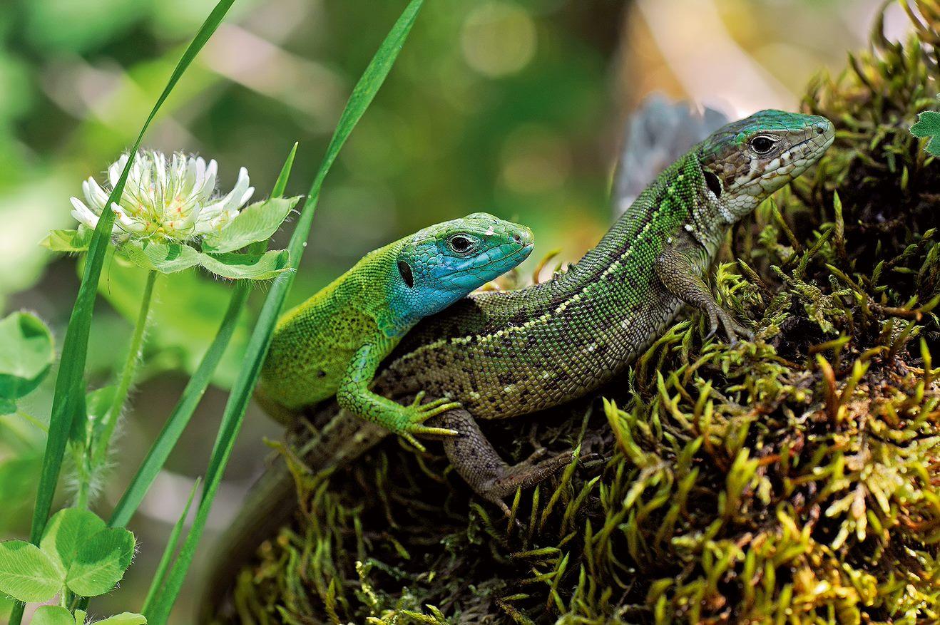 Biotope Amazonie