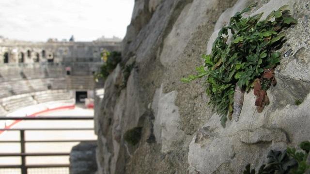 Les Clausilies romaines des arènes de Nîmes