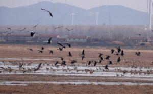 Mission de restauration du Lac Wolong, Chine, par Xavier Rufray, Biotope.