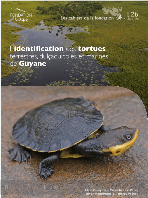 Identification des tortues terrestres, dulçaquicoles et marine de Guyane