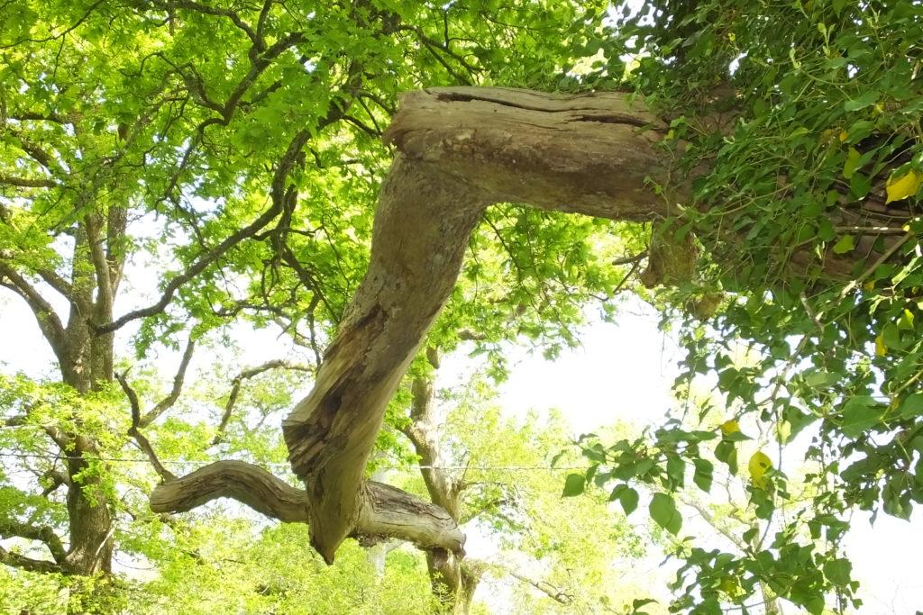 arbres- u00e0-cavit u00e9s-header